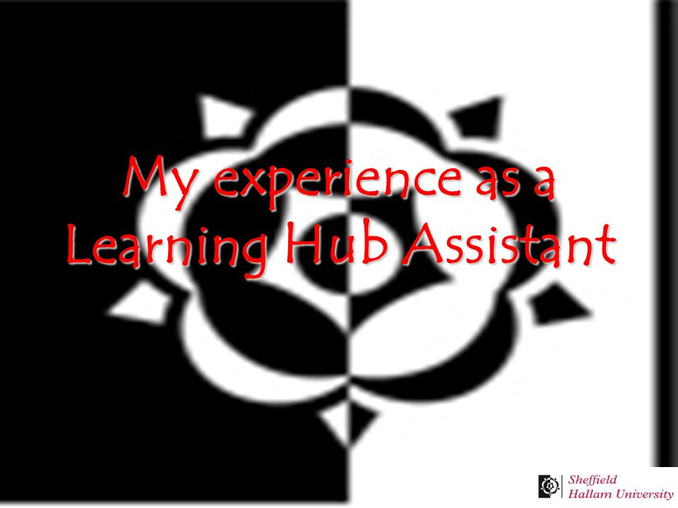 My experience as a Learning Hub Assistant
