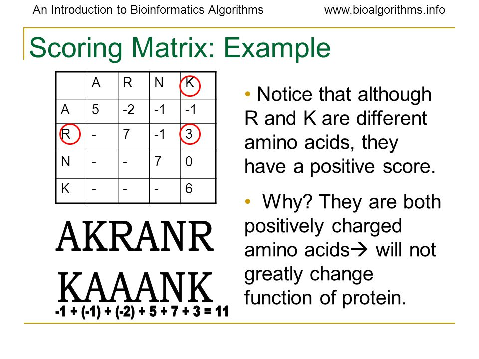 An Introduction to Bioinformatics Algorithmswww.bioalgorithms.info Scoring Matrix: Example ARNK A5-2 R-7 3 N--70 K---6 Notice that although R and K are different amino acids, they have a positive score.