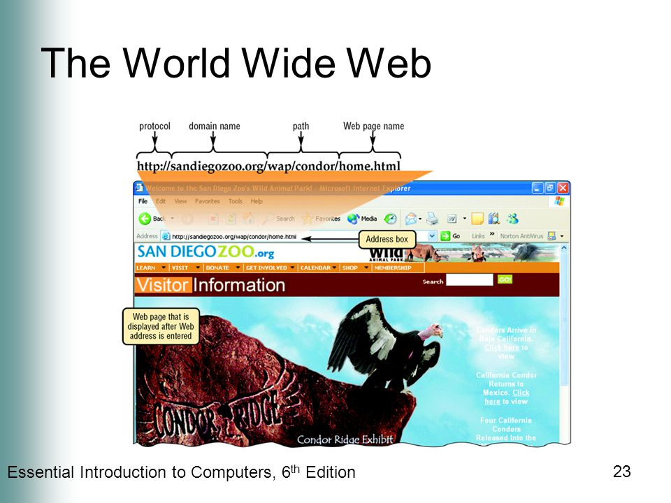 Essential Introduction to Computers, 6 th Edition 23 The World Wide Web