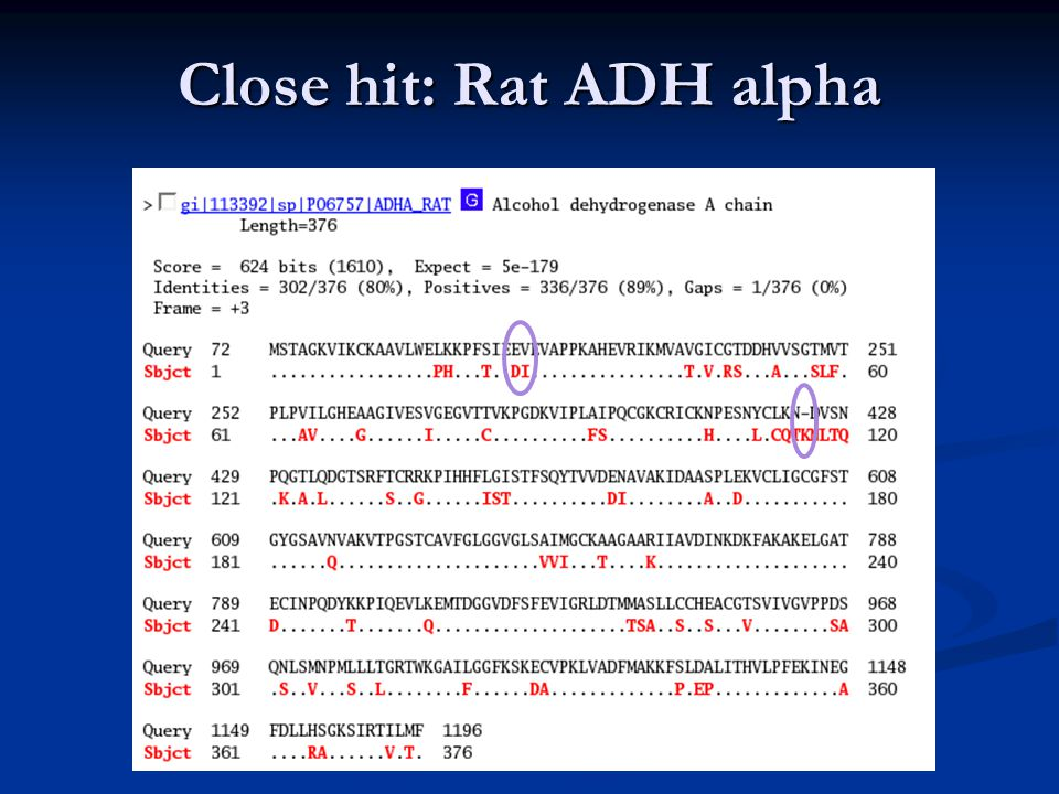 Close hit: Rat ADH alpha