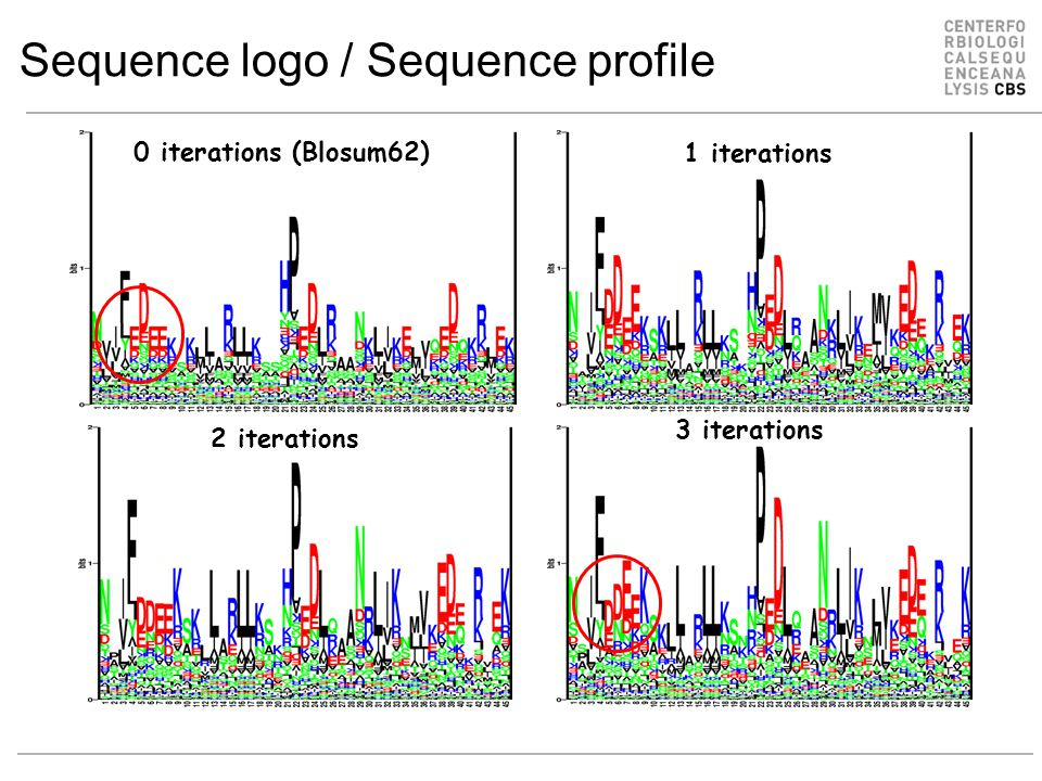 Sequence logo / Sequence profile 0 iterations (Blosum62) 2 iterations 1 iterations 3 iterations