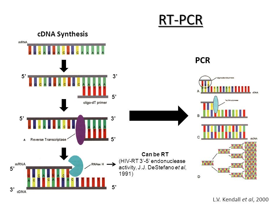 cdna sysnthesis Smart(er) cdna synthesis compared to conventional cdna synthesis unlike conventional cdna synthesis methods, which involve a multiple enzyme/multiple step procedure, the smart(er) cdna synthesis protocol is performed by one reverse transcription reaction, in a single tube, with no adaptor ligation or intervening purification steps.