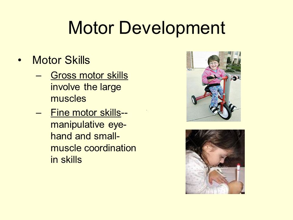 Motor Development Motor Skills – Gross motor skills involve the large muscles – Fine motor skills-- manipulative eye- hand and small- muscle coordination in skills