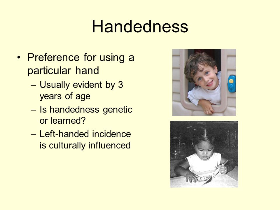 Handedness Preference for using a particular hand –Usually evident by 3 years of age – Is handedness genetic or learned.