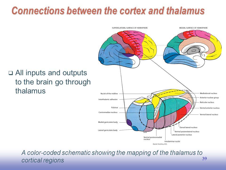 Ee141 1 Brain Functional Organization Janusz A Starzyk Ppt Download