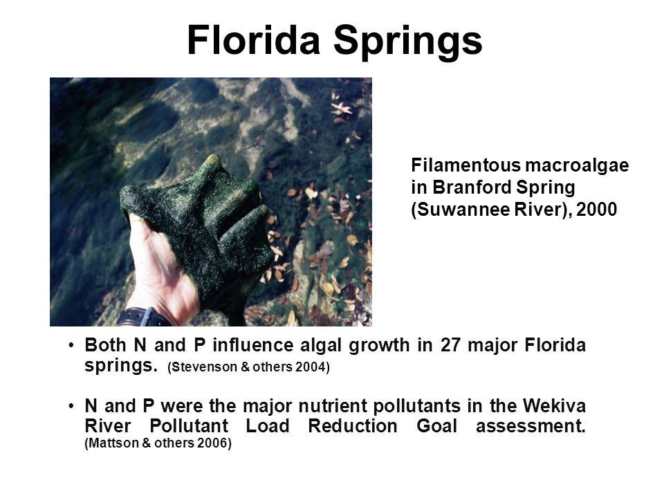 Florida Springs Both N and P influence algal growth in 27 major Florida springs.