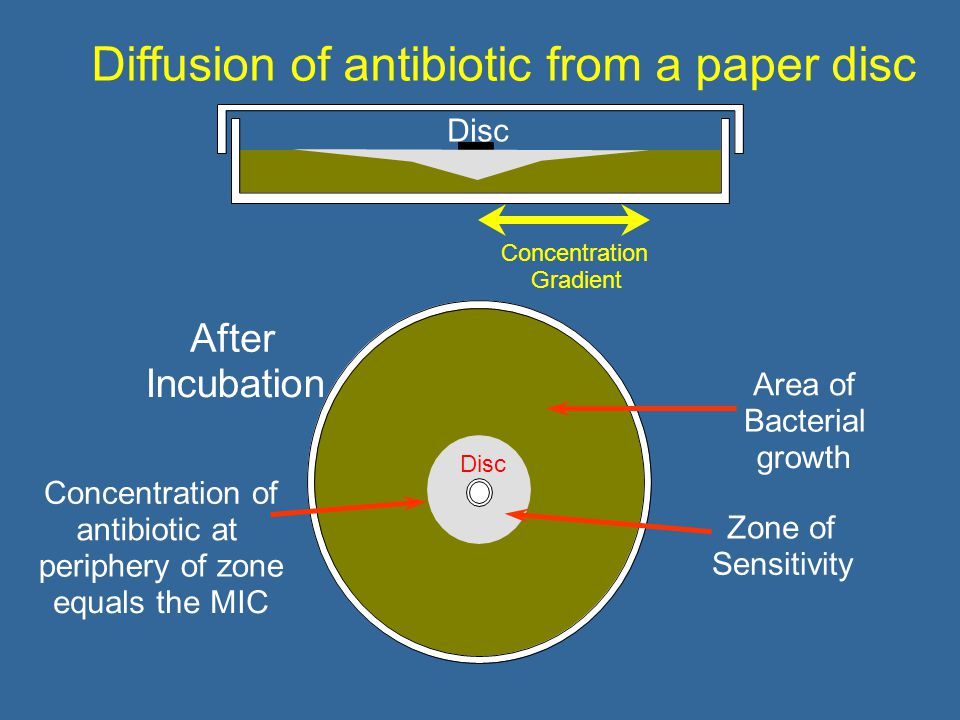 Diffusion of antibiotic from a paper disc After Incubation Zone of Sensitivity Concentration of antibiotic at periphery of zone equals the MIC Disc Area of Bacterial growth Disc Concentration Gradient