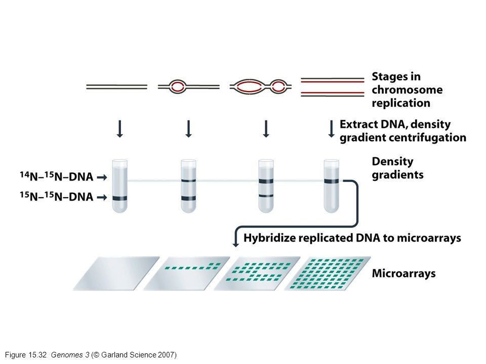 Figure Genomes 3 (© Garland Science 2007)