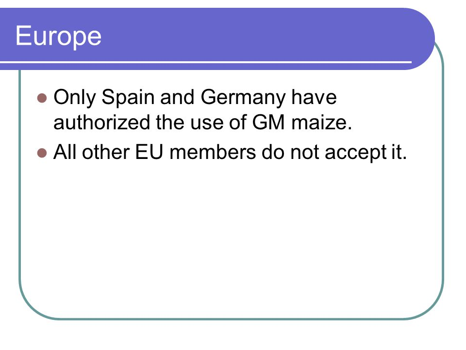 Europe Only Spain and Germany have authorized the use of GM maize.