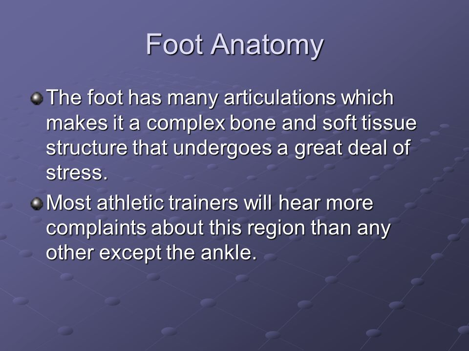 Foot Anatomy The foot has many articulations which makes it a complex bone and soft tissue structure that undergoes a great deal of stress.