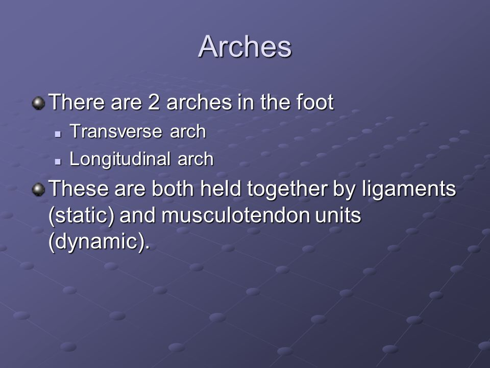 Arches There are 2 arches in the foot Transverse arch Transverse arch Longitudinal arch Longitudinal arch These are both held together by ligaments (static) and musculotendon units (dynamic).