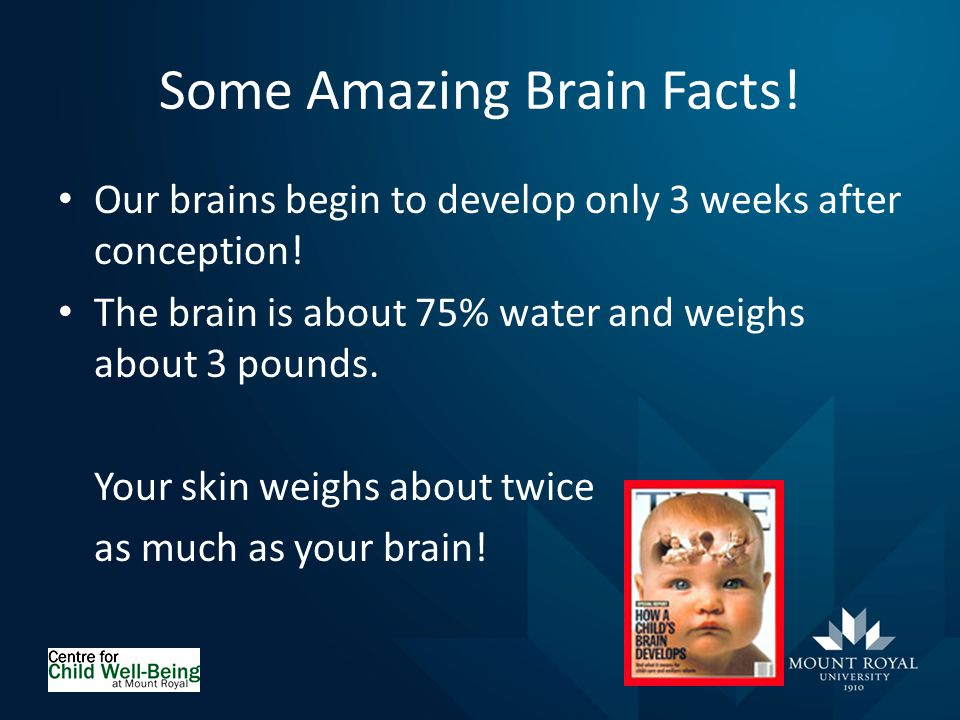 Some Amazing Brain Facts. Our brains begin to develop only 3 weeks after conception.