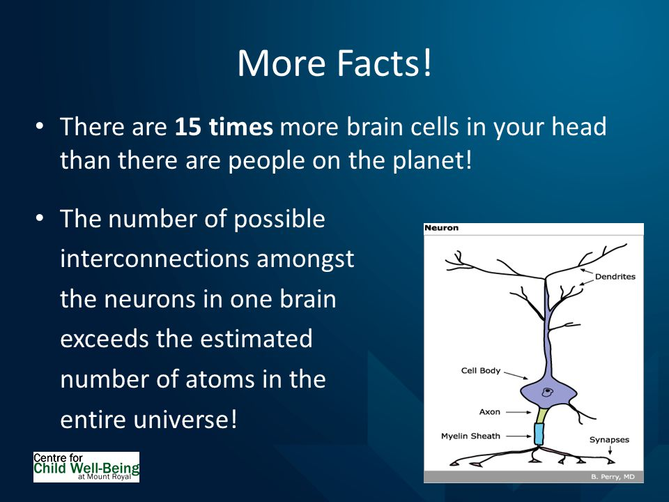 More Facts. There are 15 times more brain cells in your head than there are people on the planet.