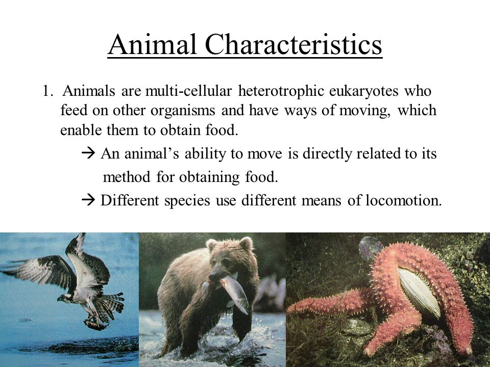 Image of: Phylum Animal Characteristics Slideplayer The Animal Kingdom The Kingdom Animalia Has By Far The Greatest