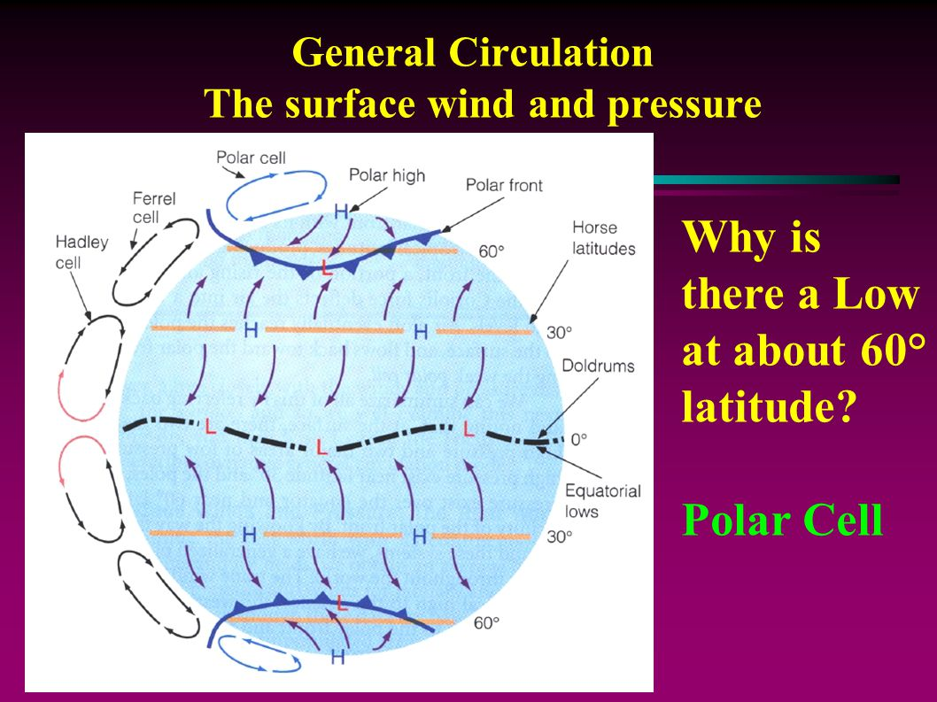 General Circulation The surface wind and pressure Why is there a Low at about 60° latitude.