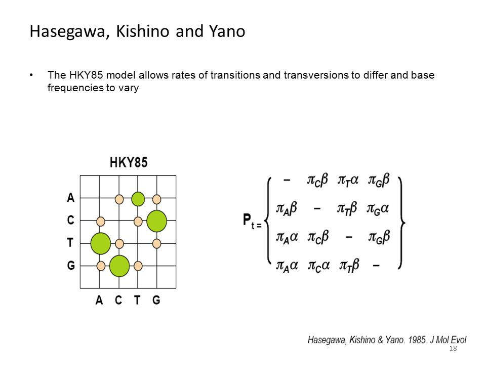 Hasegawa, Kishino and Yano The HKY85 model allows rates of transitions and transversions to differ and base frequencies to vary 18