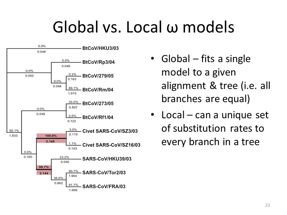 Global vs. Local ω models Global – fits a single model to a given alignment & tree (i.e.