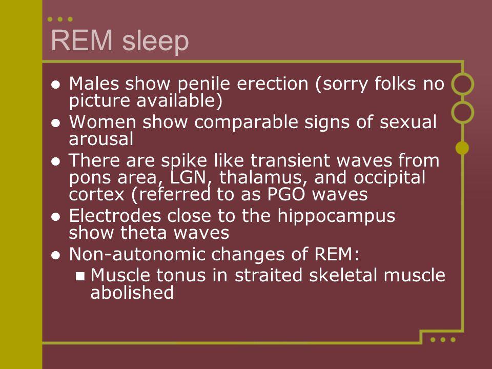 Sexual arousal in rem sleep
