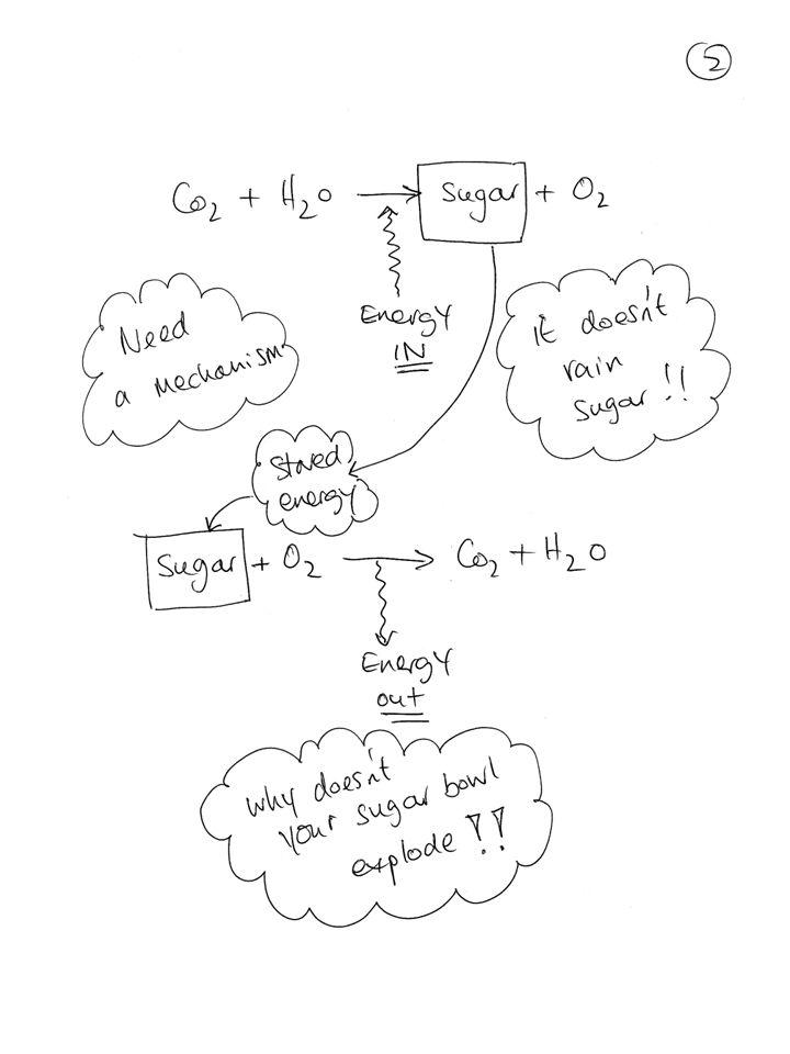 Enzymes Glyceraldehyde 3 Phosphate Dehydrogenase