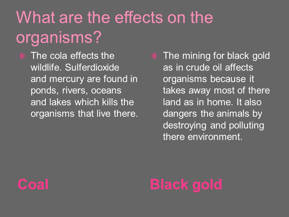 What are the effects on the organisms. CoalBlack gold  The cola effects the wildlife.