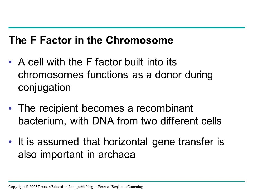 Copyright © 2008 Pearson Education, Inc., publishing as Pearson Benjamin Cummings The F Factor in the Chromosome A cell with the F factor built into its chromosomes functions as a donor during conjugation The recipient becomes a recombinant bacterium, with DNA from two different cells It is assumed that horizontal gene transfer is also important in archaea