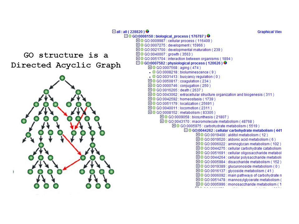 GO structure is a Directed Acyclic Graph