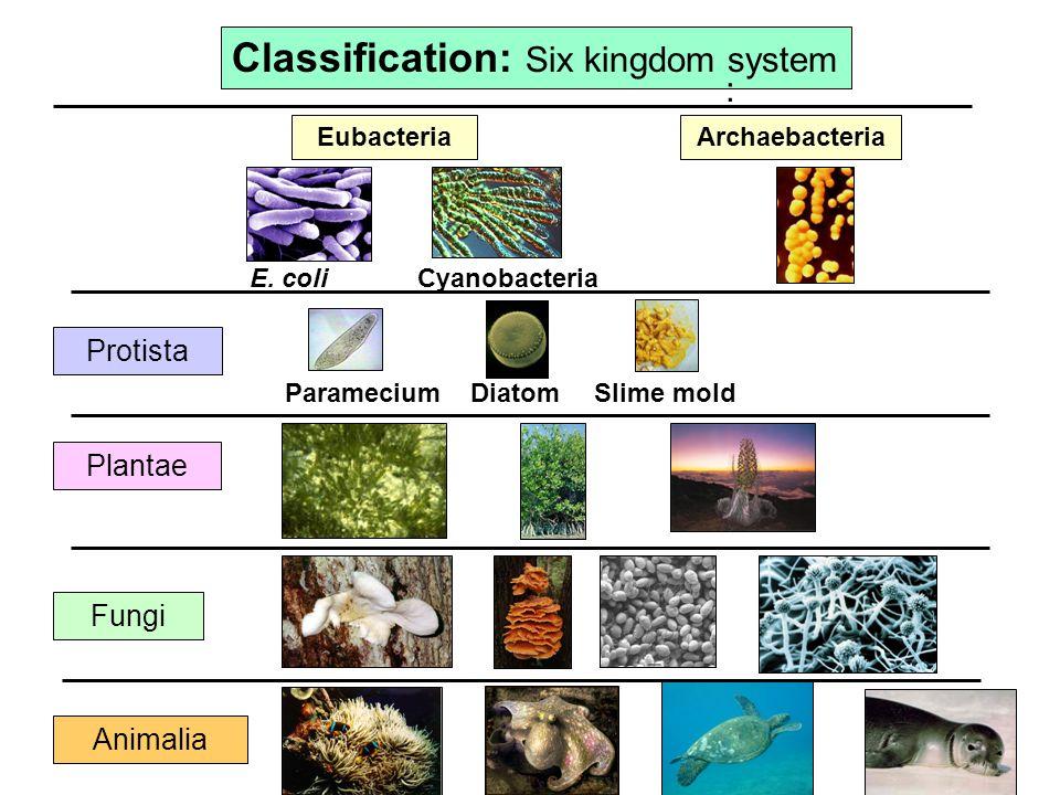 six kingdom classification system - 960×720