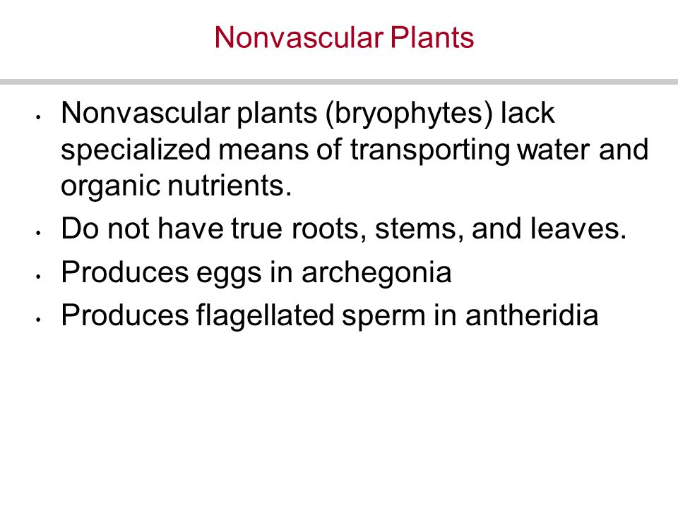 Nonvascular Plants Nonvascular plants (bryophytes) lack specialized means of transporting water and organic nutrients.