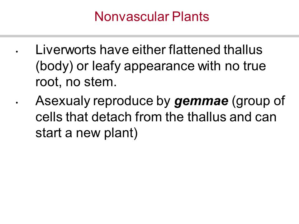 Nonvascular Plants Liverworts have either flattened thallus (body) or leafy appearance with no true root, no stem.