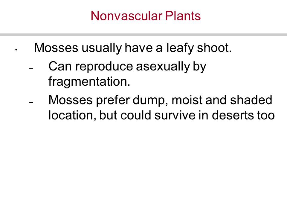 Nonvascular Plants Mosses usually have a leafy shoot.