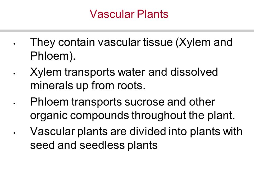 Vascular Plants They contain vascular tissue (Xylem and Phloem).