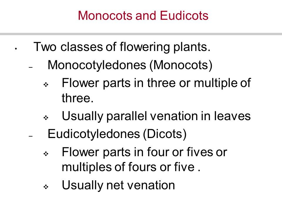 Monocots and Eudicots Two classes of flowering plants.