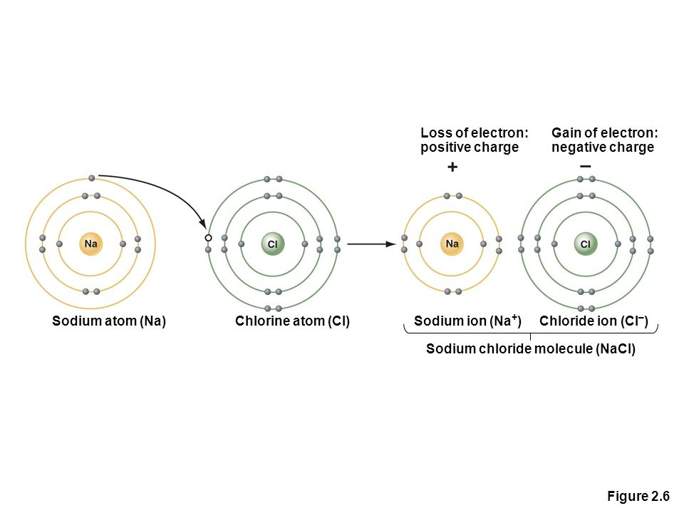 Figure 2.6 Loss of electron: positive charge Gain of electron: negative charge Sodium atom (Na)Chlorine atom (Cl)Sodium ion (Na + ) Sodium chloride molecule (NaCl) Chloride ion (Cl – )