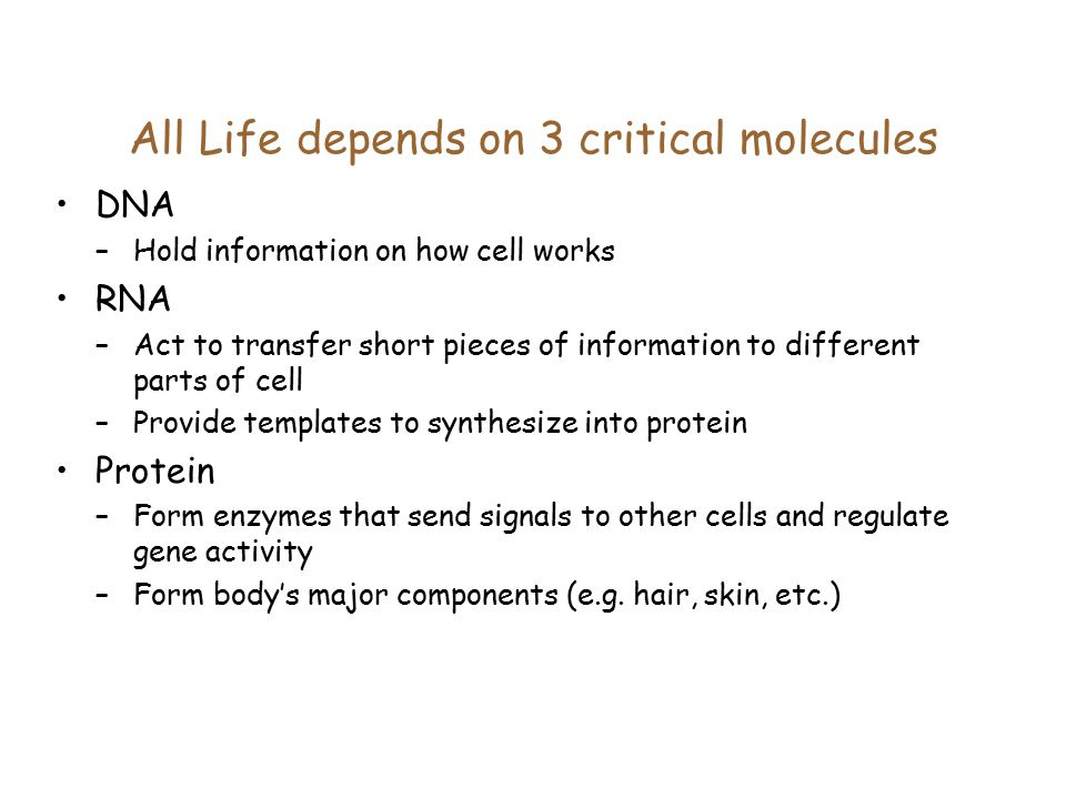 All Life depends on 3 critical molecules DNA –Hold information on how cell works RNA –Act to transfer short pieces of information to different parts of cell –Provide templates to synthesize into protein Protein –Form enzymes that send signals to other cells and regulate gene activity –Form body's major components (e.g.