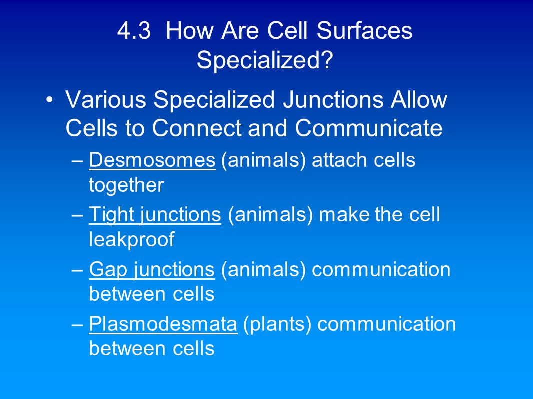 4.3 How Are Cell Surfaces Specialized.