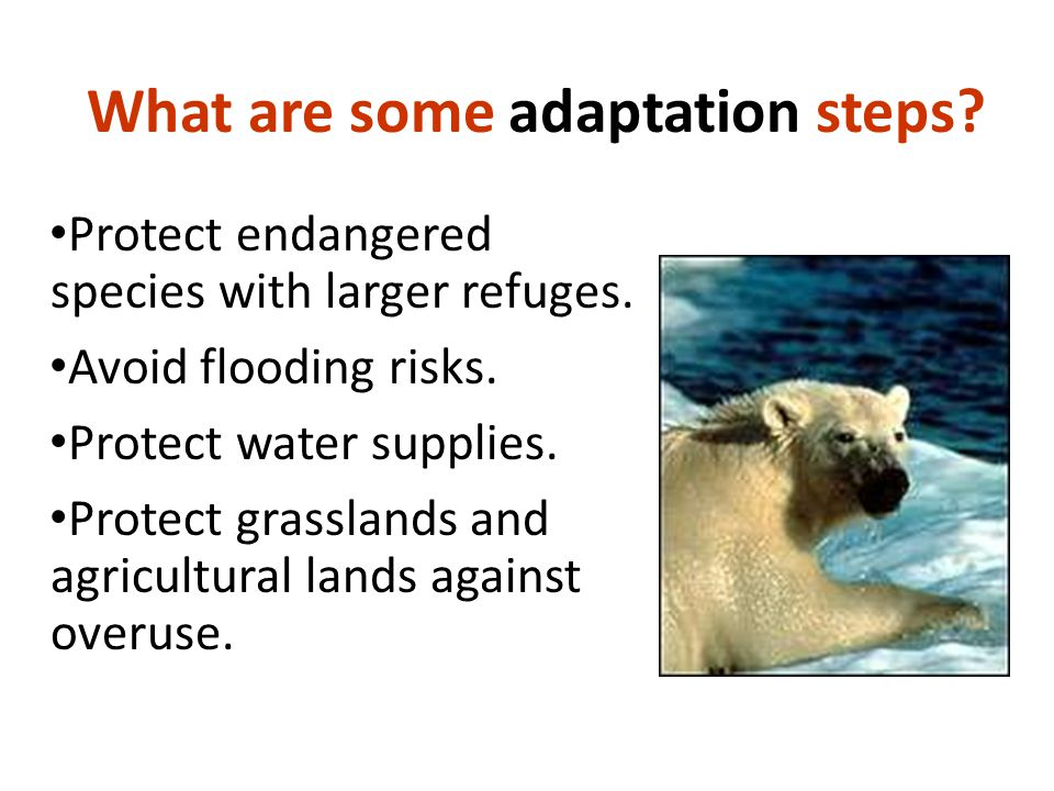 What are some adaptation steps. Protect endangered species with larger refuges.