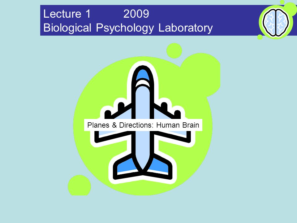Planes directions human brain lecture biological psychology 1 planes directions human brain lecture 1 2009 biological psychology laboratory ccuart Gallery