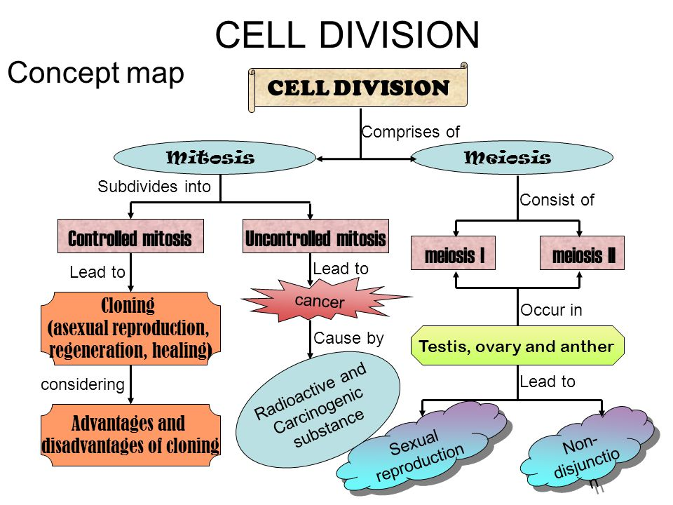 Biology Form 4 Chapter 5 Cell Division Cell Division Concept Map