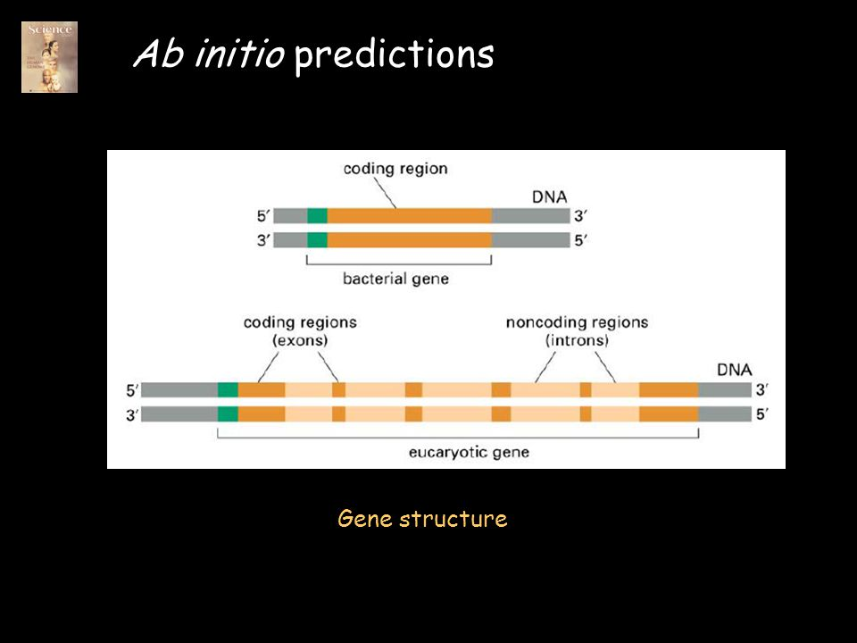 Genome Annotation and the landscape of the Human Genome Gabor T ...