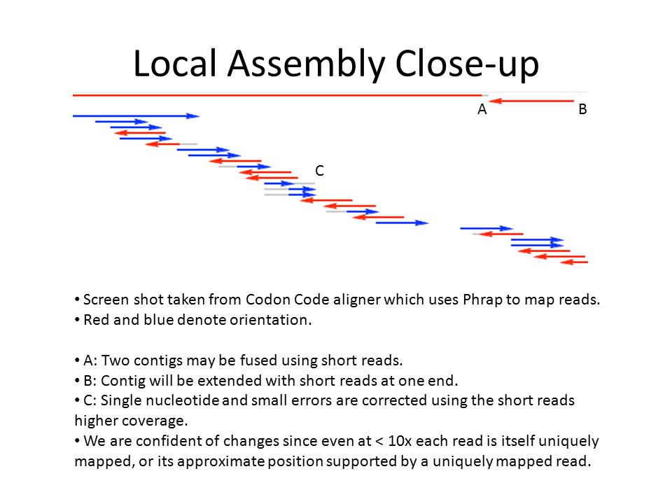 Local Assembly Close-up Screen shot taken from Codon Code aligner which uses Phrap to map reads.