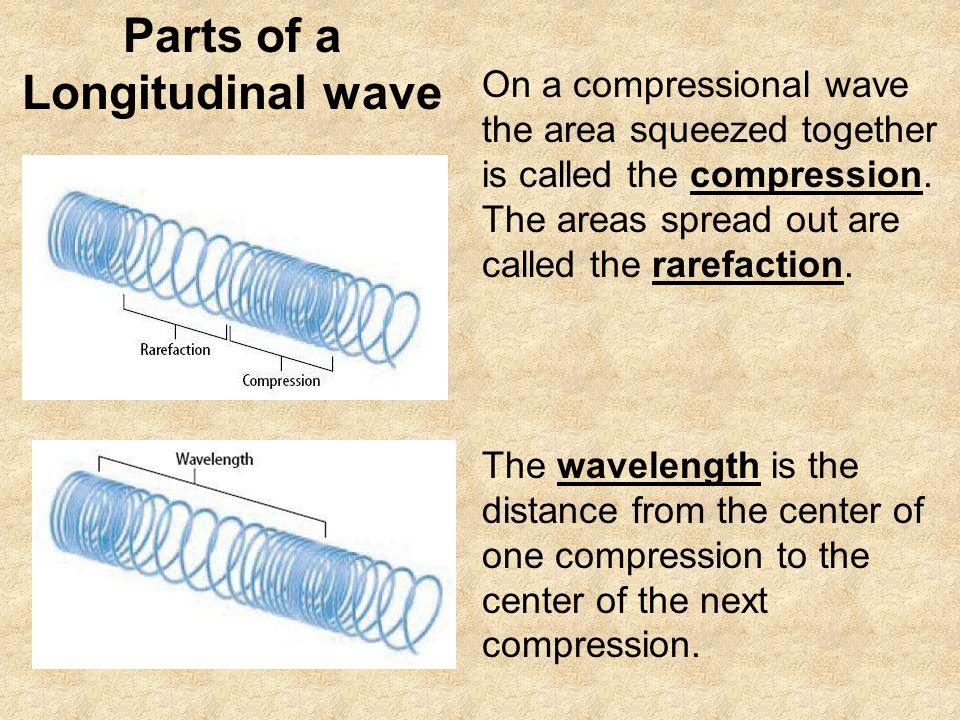 Parts of a Longitudinal wave On a compressional wave the area squeezed together is called the compression.