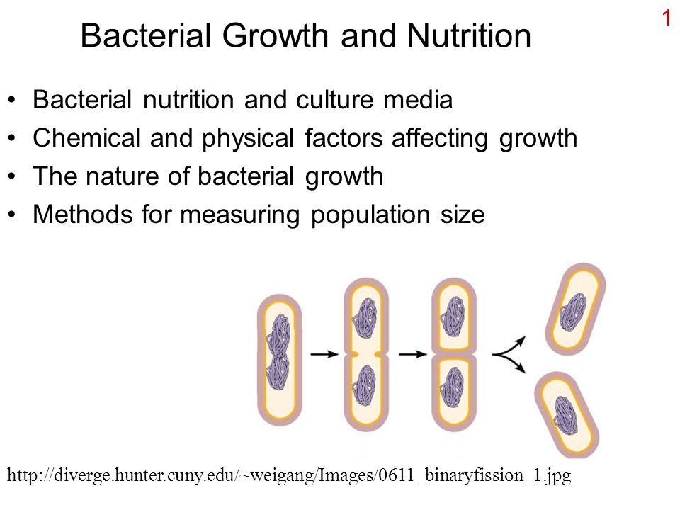 1 Bacterial Growth and Nutrition Bacterial nutrition and culture media Chemical and physical factors affecting growth The nature of bacterial growth Methods for measuring population size