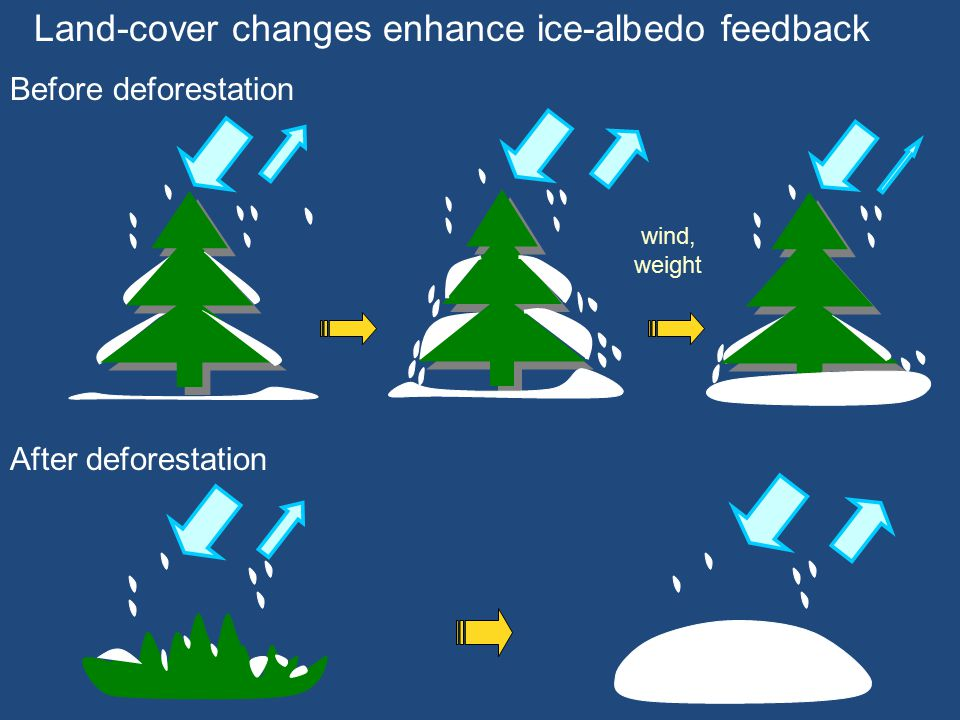Land-cover changes enhance ice-albedo feedback Before deforestation After deforestation wind, weight