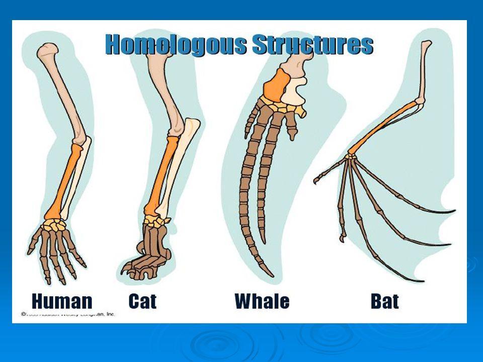 evidence for evolution evidence of change 1 homologous