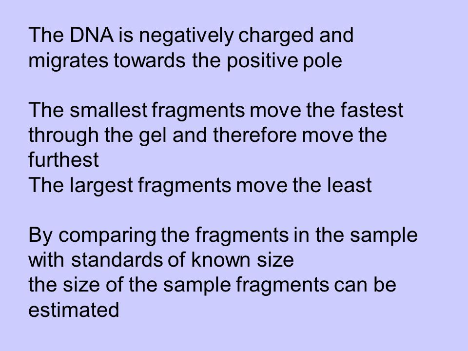 The DNA is negatively charged and migrates towards the positive pole The smallest fragments move the fastest through the gel and therefore move the furthest The largest fragments move the least By comparing the fragments in the sample with standards of known size the size of the sample fragments can be estimated