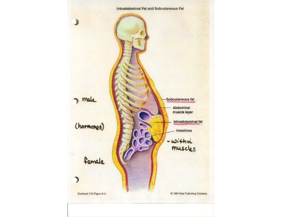 Connective 1.Loose (areolar, adipose, reticular) 2. Dense (dense ...