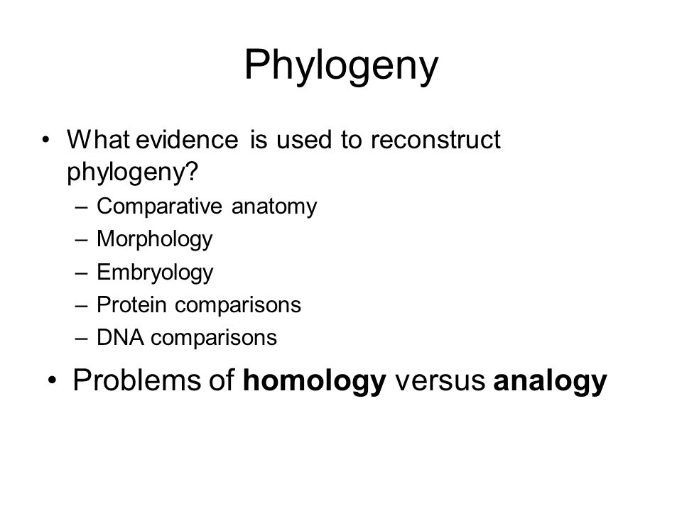 Phylogeny What evidence is used to reconstruct phylogeny.