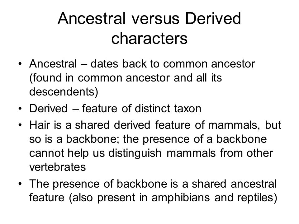 Ancestral versus Derived characters Ancestral – dates back to common ancestor (found in common ancestor and all its descendents) Derived – feature of distinct taxon Hair is a shared derived feature of mammals, but so is a backbone; the presence of a backbone cannot help us distinguish mammals from other vertebrates The presence of backbone is a shared ancestral feature (also present in amphibians and reptiles)