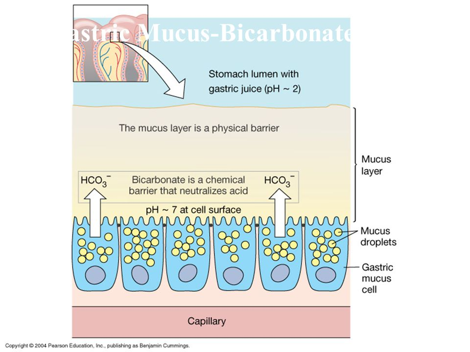 4 Gastric Mucus-Bicarbonate Barrier