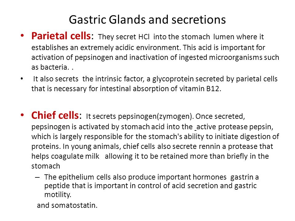 Gastric Glands and secretions Parietal cells: They secret HCl into the stomach lumen where it establishes an extremely acidic environment.